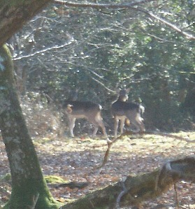 Deer through the trees