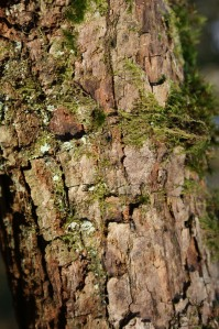 Tree bark in close up with moss and lichen