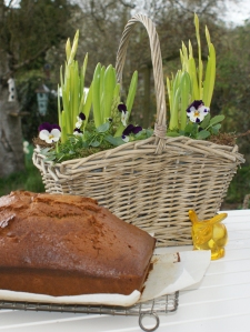 Spring bulbs & gingerbread