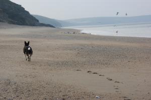 Bluebell's seen the seagulls!