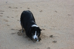 Having a rest (from digging in the sand)