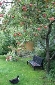Flora under the apple trees