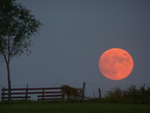 Harvest Moon by Dan Bush