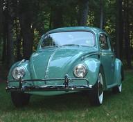 1950's beetle