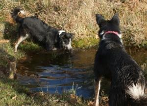 Splish, splash, splosh