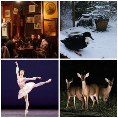 London, Snow duck, Deer & the Sleeping Beauty