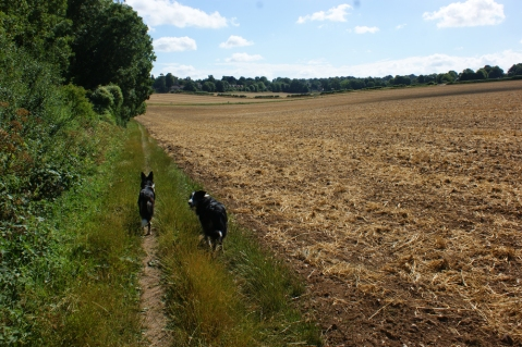 Belle can see cyclists whizzing down the other track - she's our scout, Misty as always checking that I'm not far behind.