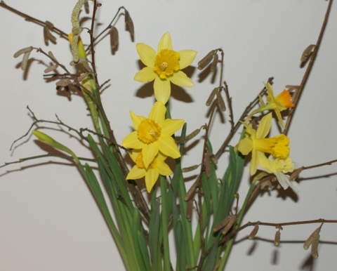 daffodils and catkins - Spring is just around the corner
