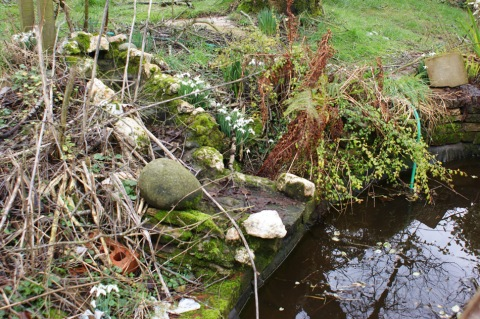 snowdrops by the pond