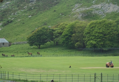 ponies and wild goats at the Valley of the Rocks