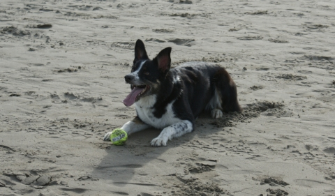 Belle - her favourite game, chasing the ball