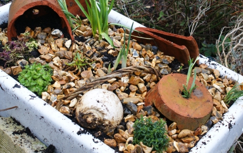 an alpine garden has been planted up in an old belfast sink