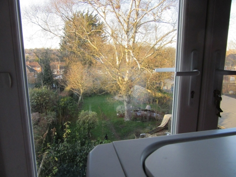 such a great view of my garden and the White Birch tree