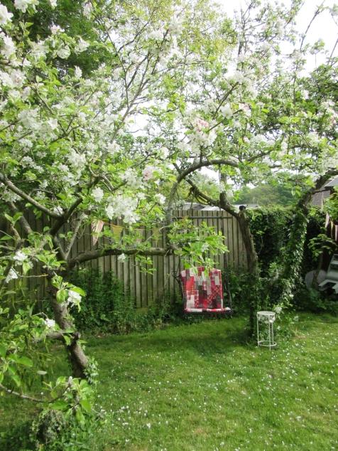 appleblossom may